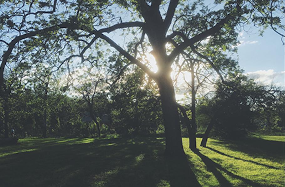 tree-light-blurb